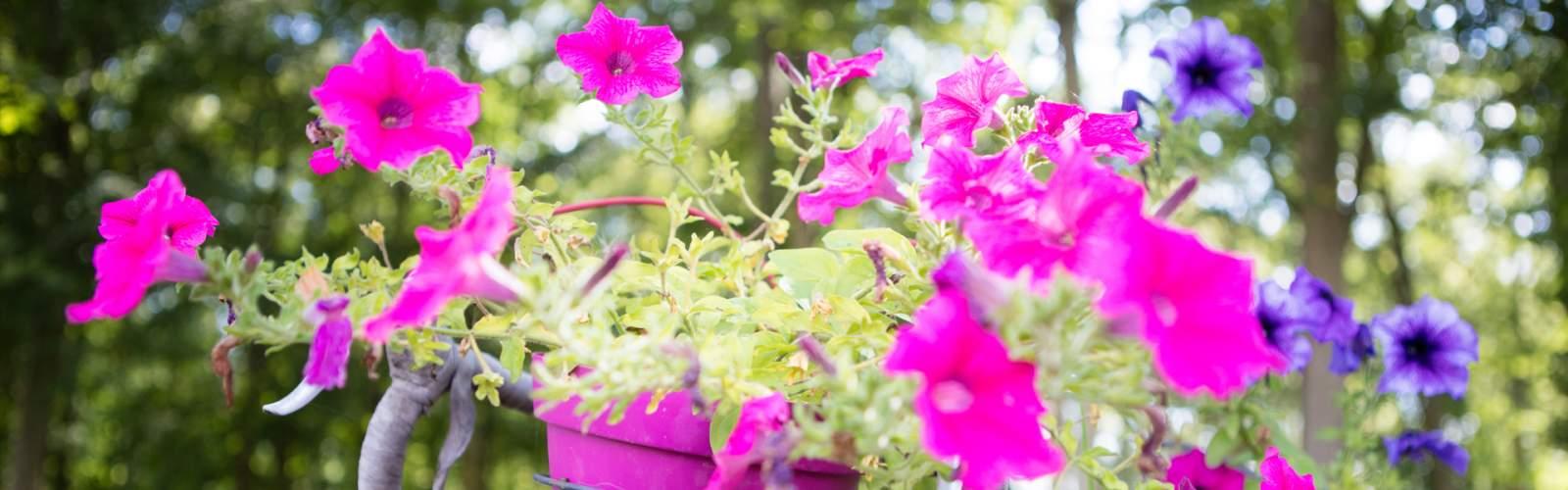 camping boise et fleuri